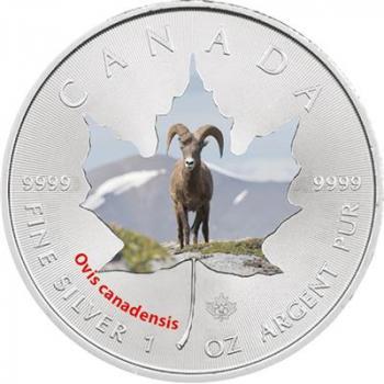 Kanada Wildlife I. Maple Leaf - Dickhornschaf - 1 Oz  (8.)